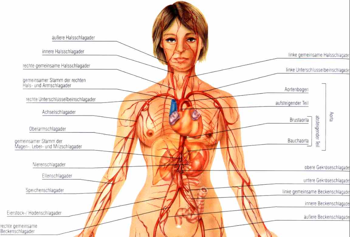 Herz- Lungen- Wiederbelebung