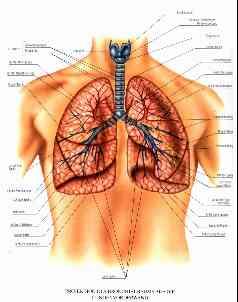 lungenflügel entfernen nach tuberkolose